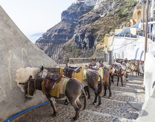 donkeys at the port of Fira in Santorini, Greece