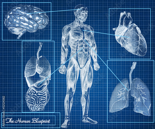 The Human Blueprint concept