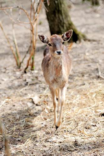 Deer on forest