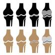 vector human knee joint symbols