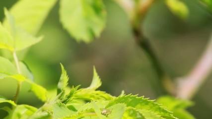 Insecte envol