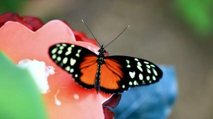 compilation de papillon