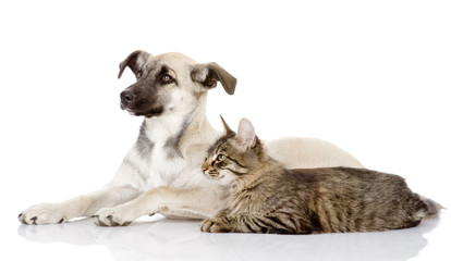 the dog and cat lie nearby. isolated on white background