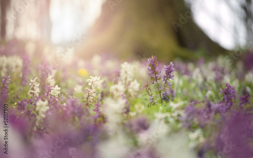 spring flowers in a colorful forest at sunset