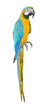 Parrot bird beautiful and bright isolated
