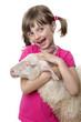 little girl with a sheep isolated on a white background