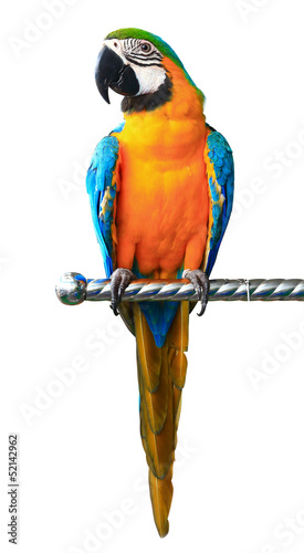 Fotobehang Papegaai Colorful red parrot macaw isolated on white background