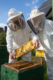 Two beekeepers maintaining bee hive poster