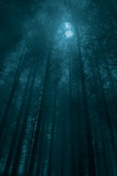 Fototapety Foggy forest in a full moon night