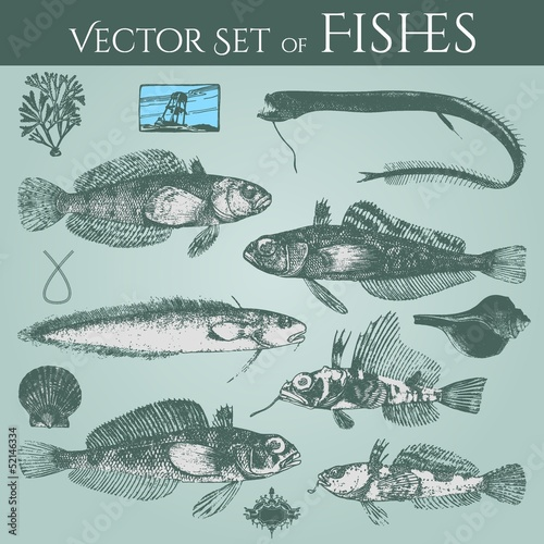 vintage drawings of fishes and shells