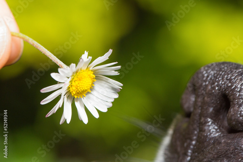 Sniffing a daisy
