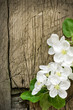 Pear blossoms over wood background