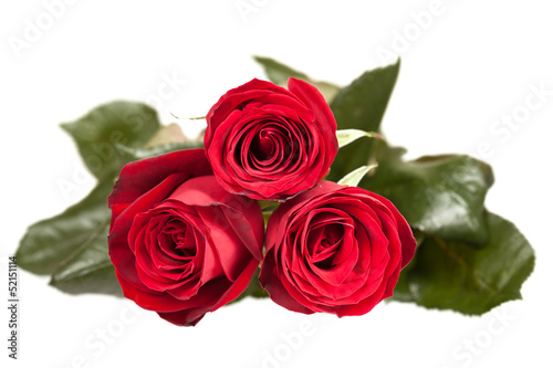 Staande foto Roses three red roses on white