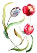 Quadro Beautiful Tulips flowers