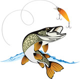 Pike and fishing lure with water splash isolated on a white back