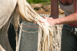 Washing a horse tail