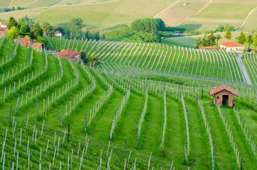 Le Langhe, Piedmont, Italy