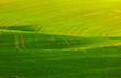 soft lines of fields and meadows in rural area with marks of tra
