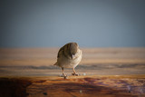 sparrow sitting on wooden table