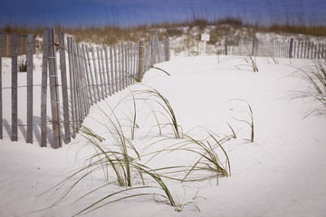 Sand Dunes and Fence at the Beach