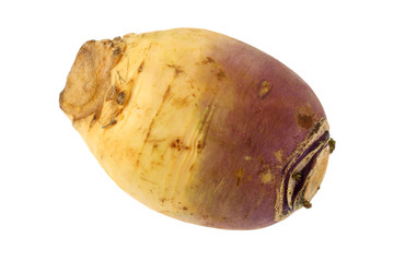 Closeup photo of Turnip (Brassica rapa)