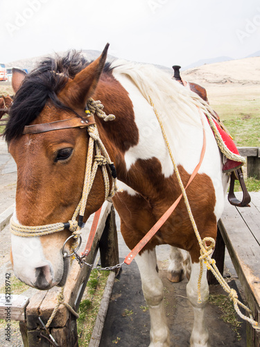 Horses saddled up and ready to ride