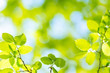 Spring green Leafs - defocused Background