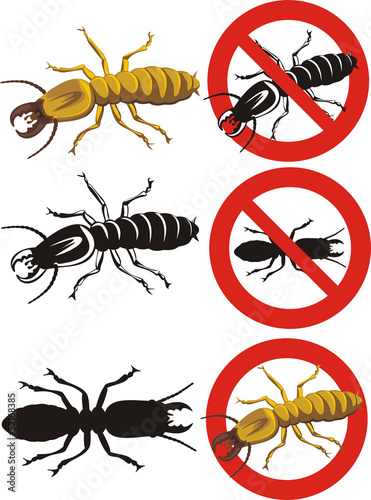 termite - warning signs