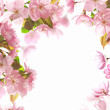background with pink blossom