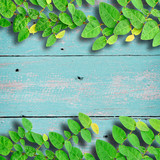 Ivy fixing climbing tree on grunge wood background on green colo