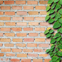 Brick wall with ivy fixing climbing tree background.