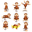 Monkey with different expression