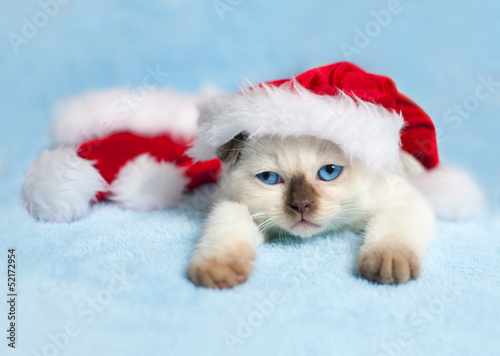 Little cat wearing Santa's hat