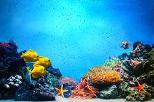 Underwater scen. Korallrev, fisk grupper i klart havsvatten