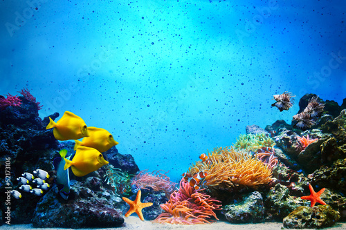 Leinwanddruck Bild Underwater scene. Coral reef, fish groups in clear ocean water