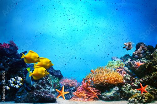 Poster Underwater scene. Coral reef, fish groups in clear ocean water