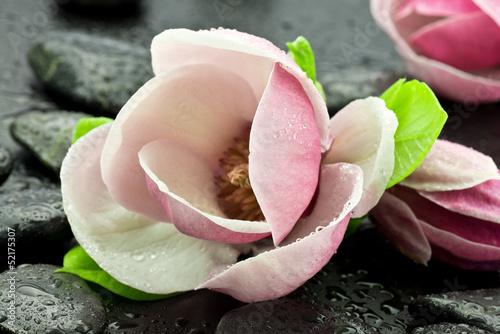 Magnolia z kamieniami do spa