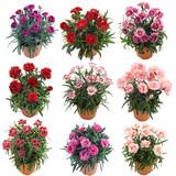 Flower Collection Garofani