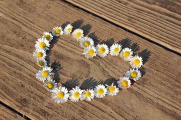 Herz aus Gänseblümchen auf Holzboden
