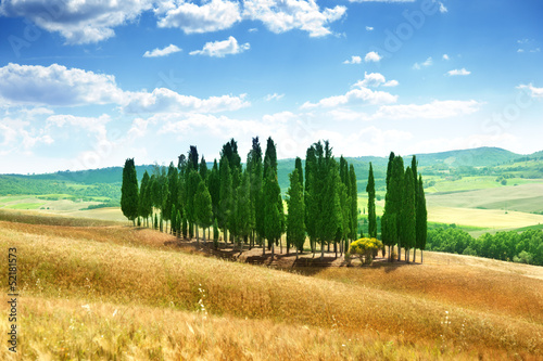 trees in Val d'Orcia, Tuscany