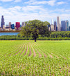 American Red Farm With Chicago Skyline in Background