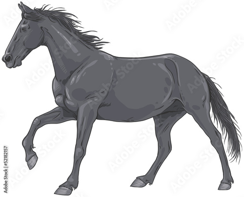 Isolated black galloping horse illustration