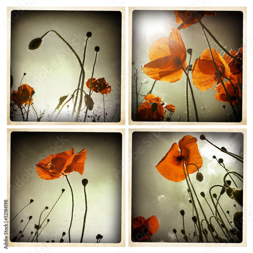 Smartphoneography - poppies