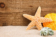 Sea star and shells