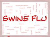 Swine Flu Word Cloud Concept on a Whiteboard