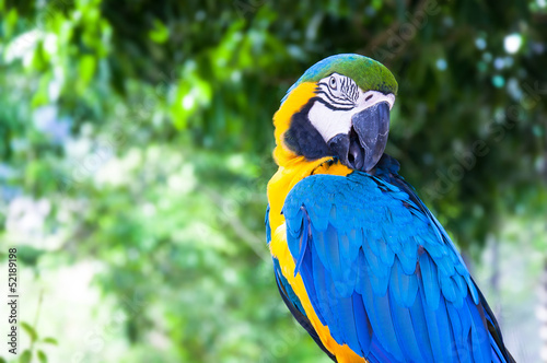 Colorful Macaw against natural background