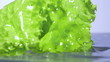 Fresh lettuce salad falls under water with a splash. isolated on
