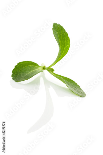 Stevia isolated.