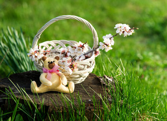 Wicker basket with blooming branch and toy bear in the garden