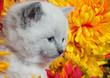 Cute kitten and flowers